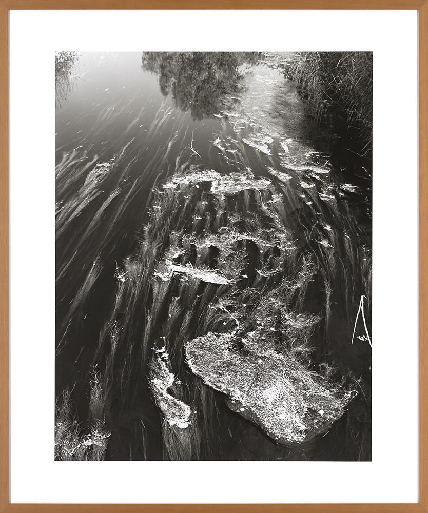 Schwarzbach Wasserpflanzen Caffenol